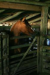 Cavalo em galpão de fazenda.<br />  FOTO: Jefferson Bernardes/Preview.com