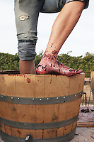 Grape stomp party photographed by Heather Van Gaale