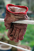 drying garden glove