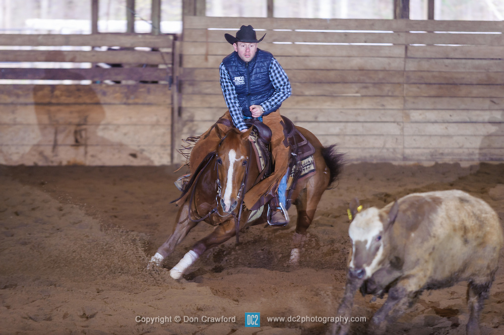 April 30 2017 - Minshall Farm Cutting 2, held at Minshall Farms, Hillsburgh Ontario. The event was put on by the Ontario Cutting Horse Association. Riding in the 25,000 Novice Horse Non-Pro Class is Eric Bouchard on The Reyl Slim Shady owned by the rider.