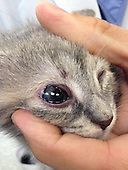 Homeless Kittens Born without Eyelids