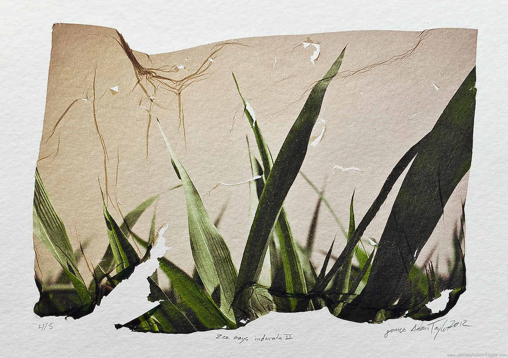 Description:<br />