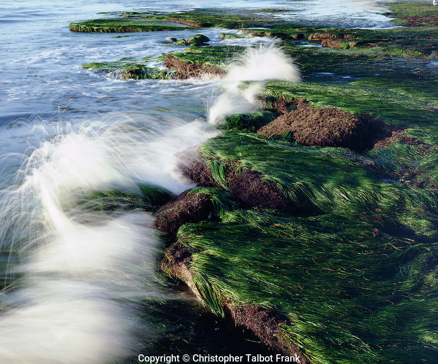 USA; California; San Diego.  Waves breaking on tidepools covered in eel grass