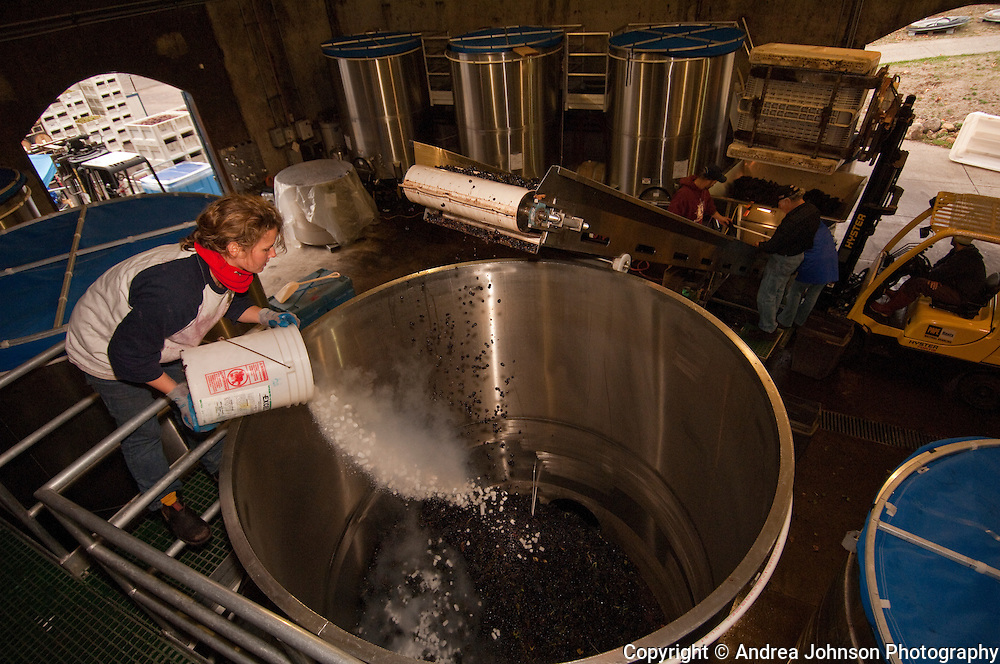 Dumping dry ice on pinot noir grapes in a fermentation tank, Chehalem winery, Willamette Valley, Oregon