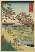 Twilight Hill at Meguro: From 'Thirty-six View of Mount Fuji'  1858. Utagawa Hiroshige (1797-1858) Japanese Ukiyo-e artist. Fuji seen from Meguro, Tokyo, red maple trees in foreground. Landscape with streams a a village.