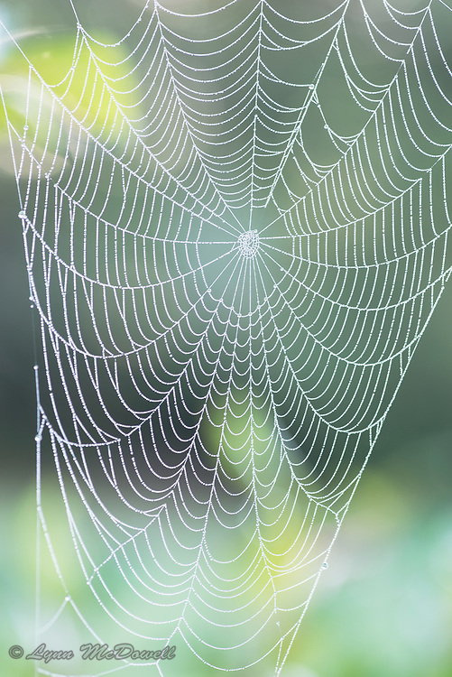 The morning dew lets us appreciate the beauty of this spider web.  Middletown, Delaware
