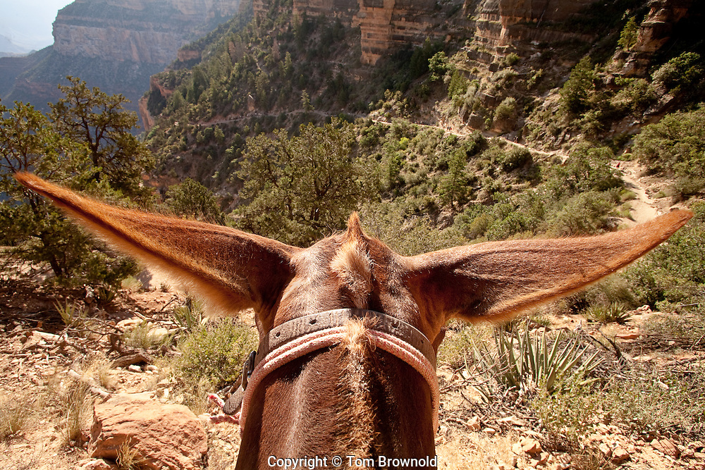 Looking ahead at the days ride from atop Bubba. We are on the Bright Angel trail on our way down the canyon to Phantom Ranch for the night.