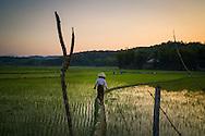 Expansive rice fields of Dien Bien Phu, Muong Thanh Valley, Dien Bien Province, Vietnam, Southeast Asia