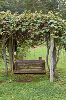Swing under a grape arbor at Arthur Morgan School near Burnsville, North Carolina. Image taken with a Leica T camera and 35 mm f/1.4 lens.