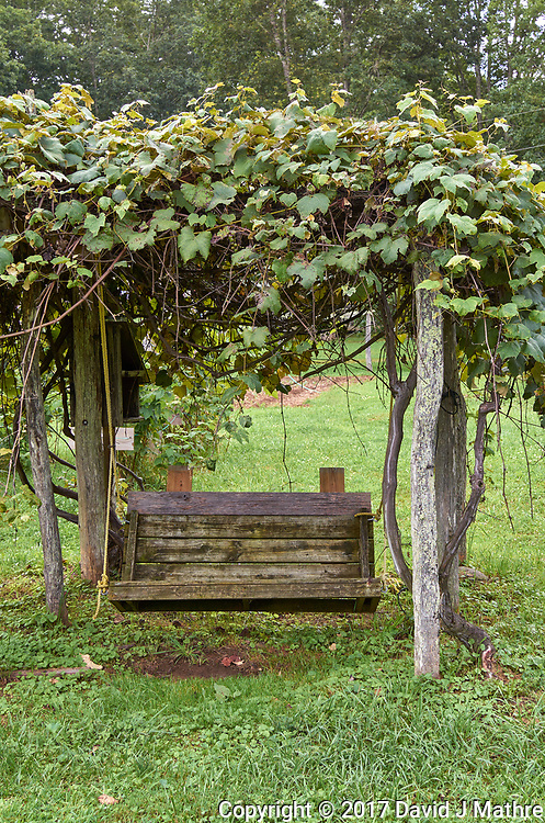 Swing under a grape arbor at Arthur Morgan School near Burnsville, North Carolina. Image taken with a Leica T camera and 35 mm f/1.4 lens.