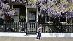 © Licensed to London News Pictures. 26/05/2013. London, UK A young boy scoots past a house with a lovely display of laburnum hanging. People enjoy the warm Bank Holiday weather along the banks of the River Thames in West London today 26th May 2013. Photo credit : Stephen Simpson/LNP