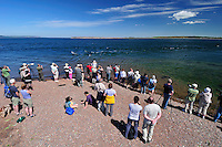 Visitors and local people gathering to watch Bottle-nosed Dolphins on an incoming tide at Chanonry Point,<br /> Tursiops truncatus,<br /> Moray Firth, Nr Inverness, Scotland - May
