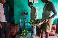 Collection centre owner Ganesh Kumar Singh (in white shirt), 30, weighs and sorts out vegetables that other producer group farmers bring in to be sold to his collection centre in Machahi village, Muzaffarpur, Bihar, India on October 27th, 2016. Ganesh and his wife, Asha Devi, a producer group member, rent out a part of their house to be used as a collection centre for Producer Group farmers. Non-profit organisation Technoserve works with women vegetable farmers in Muzaffarpur, providing technical support in forward linkage, streamlining their business models and linking them directly to an international market through Electronic Trading Platforms. Photograph by Suzanne Lee for Technoserve