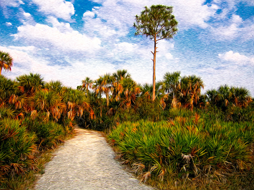 A trail through the palmettos and cabbage palms of Southwest Florida.....