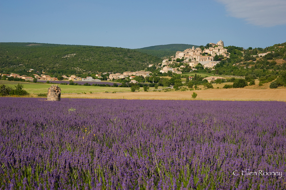 A lavender field below the village of Sault, Vaucluse, Provence, France