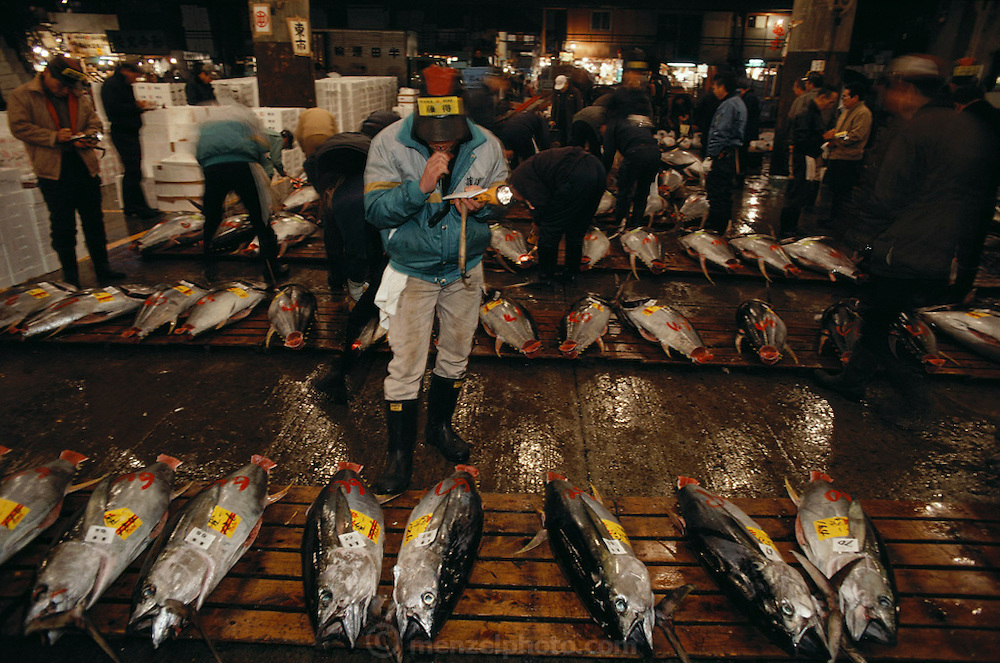 Frozen tuna with numbers painted on them ready for the pre-dawn auction at the Tsukiji wholesale fish market in Tokyo, Japan.
