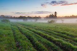 Fog in a field in Durham, New Hampshire.