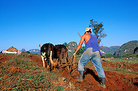 Cuba, Province de Pinar del Rio, Vallée de Viñales, Labourage des champs // Cuba, Region of Pinar del Rio, Valley of Viñales, Field digging