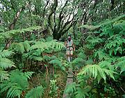 Kamakou Preserve, Molokai, Hawaii, USA<br />