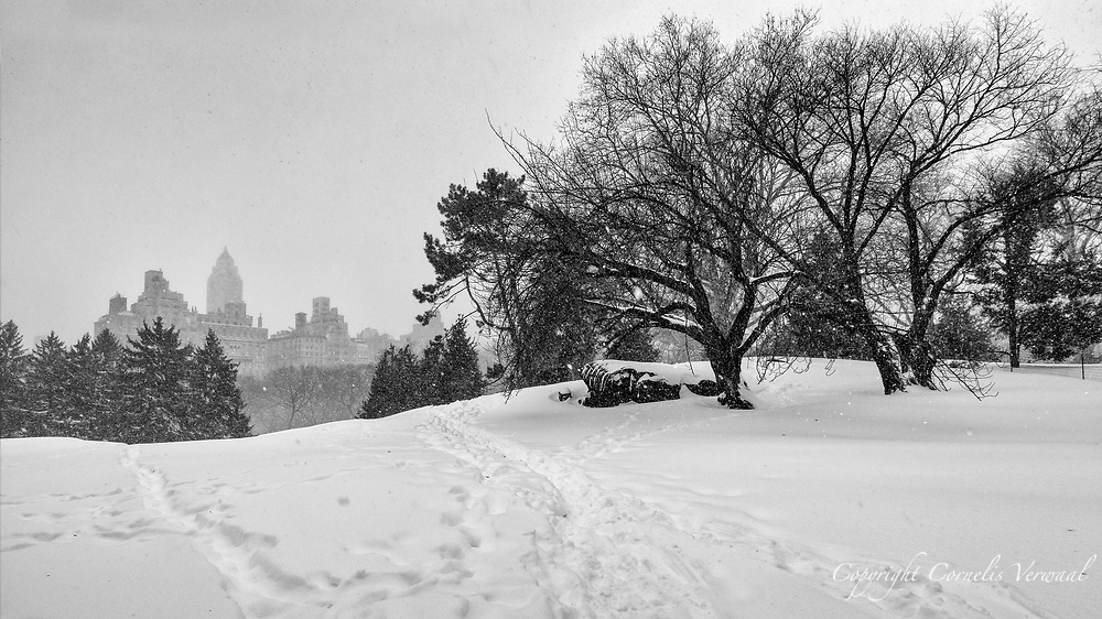 Cedar Hill in Central Park during the blizzard of 2016.