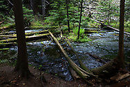 Ross Creek in the Ross Creek Cedars Research Natural Area. Cabinet Mountains in the Kootenai National Forest, northwest Montana.