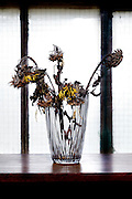 wilted sunflowers in a vase