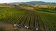 Arilyn pinot noir harvest 2018, Chehalem Mountains AVA, Willamette Valley, Oregon