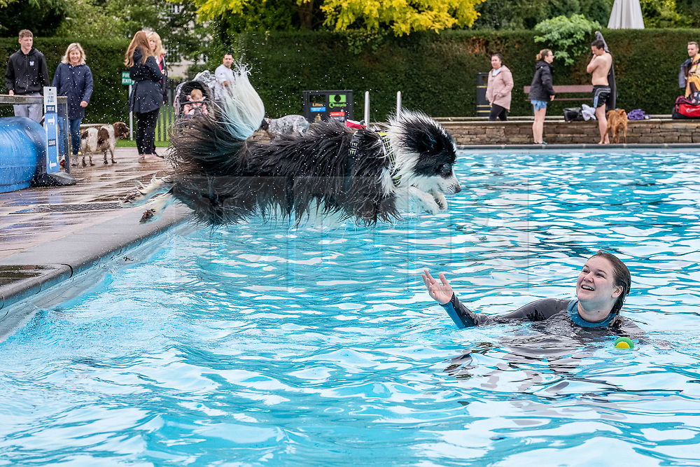 © Licensed to London News Pictures 12/10/2019, Cheltenham, UK. Now in its 3rd year the Cheltenham Lido holds its annual Dog Swim event. The end of season swim allows dogs and thier owners to take a dip in the outdoor pool. Photo Credit : Stephen Shepherd/LNP