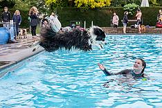 2019_10_12_Cheltenham_Dog swim_SSH