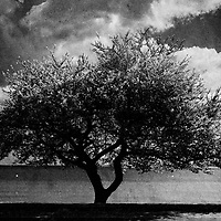 A tree at the beach