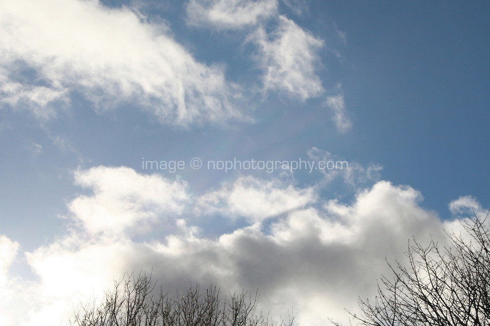 Winter sunlight in the sky with bare trees in Ireland