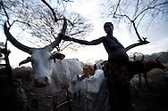 Akul Nadai tends to her cattle at dusk in a remote cattle camp in Jonlgei state on March 11, 2010.  For many South Sudanese tribes, cattle are the most important thing on earth and worth dying for.  This has caused presistent conflict and clashes over time. Women are often valued less than cattle.
