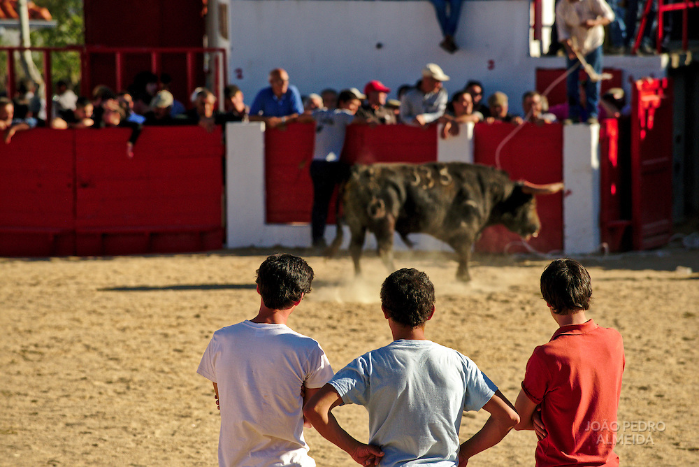 "Young men ""measuring"" the bull's strength and bravery"