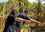 Old Bethpage, New York, USA. September 28, 2014. LAURA YORBURG, of Yorktown Heights, points in direction she thinks leads to exit of corn field maze, while a man and his young daughter in a stroller are pointing to path they will take, at the 172nd Long Island Fair, a six-day fall county fair held late September and early October. A yearly event since 1842, the old-time festival is now held at a reconstructed fairground at Old Bethpage Village Restoration.