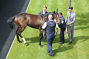 Spell trained by Richard Hannon in the Pre-Parade Ring before The Listed Langleys Solicitors British EBF Marygate Filles Stakes over 5f (£50,000) at the York Dante Meeting at York Racecourse, York, United Kingdom on 18 May 2018. Picture by Mick Atkins.