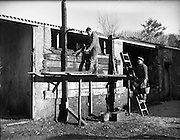 26-29/01/1960<br /> 01/26-29/1960<br /> 26-29 January 1960<br /> Gael-Linn Special at Gweedore and Teelin Co. Donegal. Two men at work on a shed.