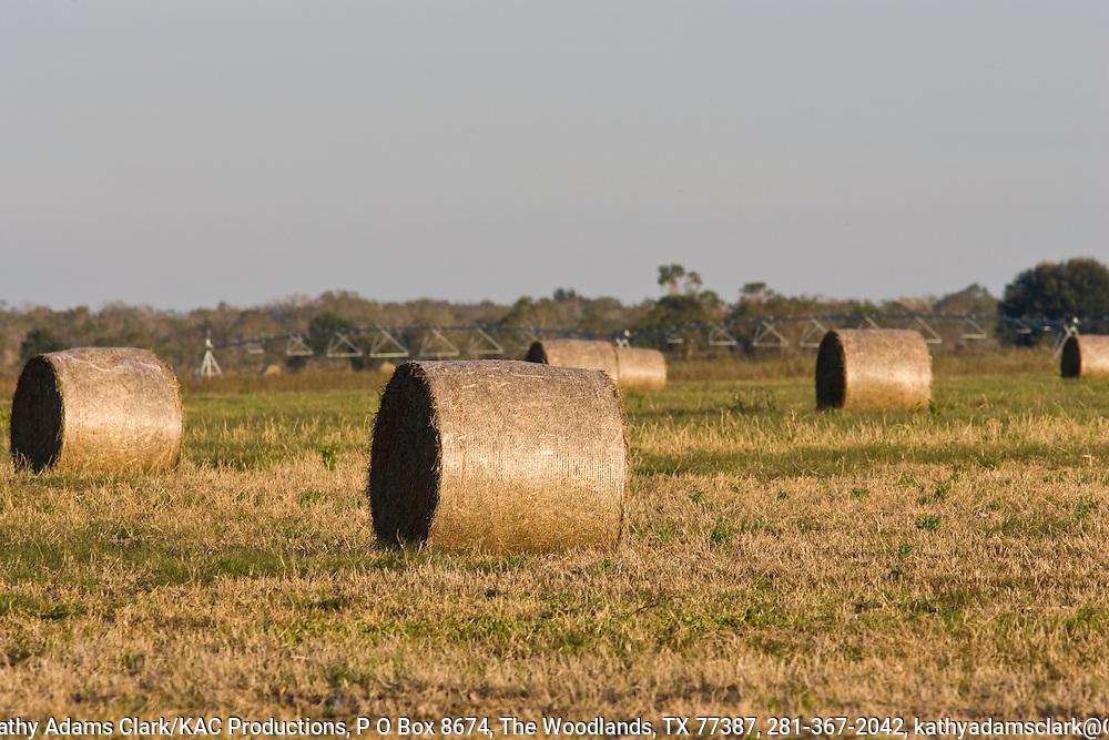 Round hay bales, Katy Prairie, West Harris County, near Houston, Texas,  tall grass prairie.