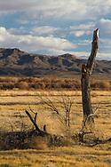 NEW MEXICO: Socorro Co.<br /> Bosque Del Apache National Wildlife Refuge<br /> 25-Nov-2011<br /> J.C. Abbott &amp; K.K. Abbott