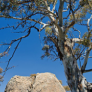 Rock and tree in the Australian outback