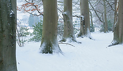 Hilverbeek, winter,  's-Graveland, Wijdemeren, Noord Holland, Netherlands