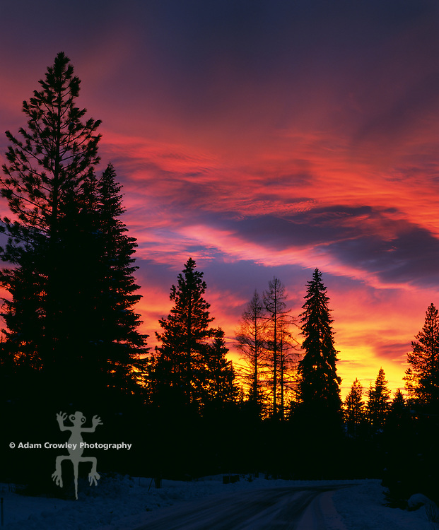 McCall, Idaho sunset with trees against sky
