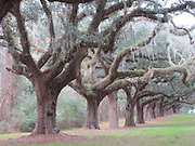 Boone Hall Plantation Charleston, South Carolina. Mt Pleasant, SC. Established in 1681 a working plantation known for its moss-draped 3/4-mile Avenue of Oaks & original slave cabins. © Karen Pulfer Focht-ALL RIGHTS RESERVED-NOT FOR USE WITHOUT WRITTEN PERMISSION