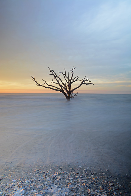 "The waves sliding out as the sun rises on a ""Mystical Tree"""