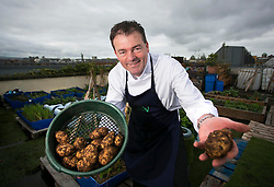 Repro Free: 08/10/2013 Pádriac Óg Gallagher is pictured harvesting his lumper potatoes at the Urban Farm ahead of the re launch of the Boxty House, Temple Bar. The restaurant has seen a complete re-branding giving a relaxed contemporary fell to this iconic Irish eatery. Picture Andres Poveda
