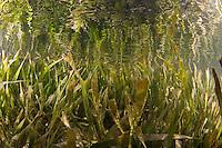 Guam soft corals and Sea Grasses
