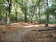 Nederland, Ubbergen, 15-10-2012Het was een dag met mooi herfstweer. Herfstbos. Foto: Flip Franssen/Hollandse Hoogte