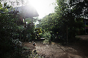 A dog walks around a house in Samphu, near Pak Ok village, where the first case of surrogate motherhood was recorderd.<br /> Lom Sak, Petchabun province, Thailand. Aug 24 2014<br /> Credit : Giorgio Taraschi for The New York Times