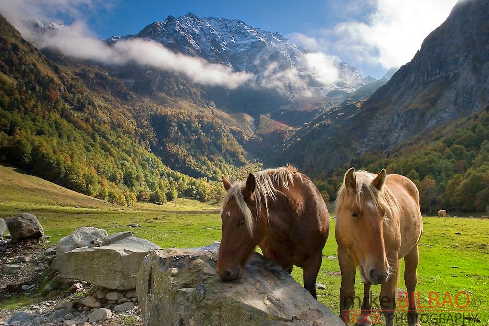 Horses in a mountain meadow. <br /> Plan dera Artiga and Tuc des Neres mountain. Artiga de Lin.<br /> Aran Valley. Pyrenees mountain range. Lerida province.  Catalonia, Spain, Europe.