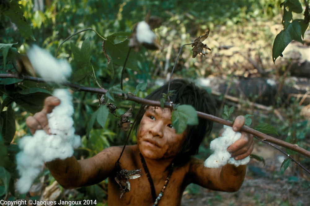 Slash-and-burn agriculture by Indians of Guiana Highlands of Venezuela: Hoti girl picking cotton.