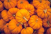 Closeup of a basket of small pumpkins.